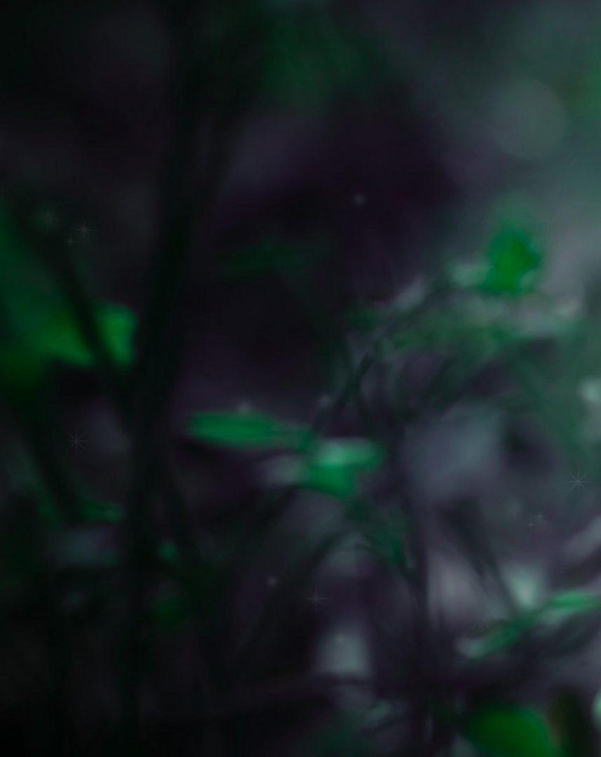Dark Green Nature Blur Background Free Stock Download