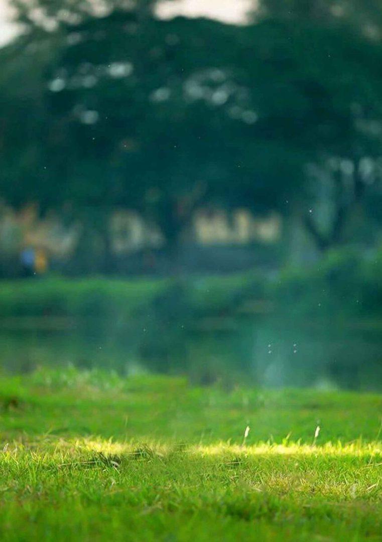Nature Blur Background Free Stock ...